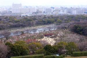 大阪城の8階展望台から見える梅林(3月中旬)