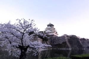大阪城の桜(花見)
