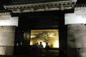 大阪城 大手門付近の夜桜
