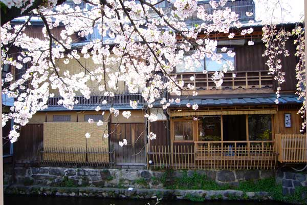 祇園白川の桜(花見)