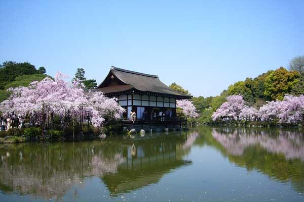 平安神宮の桜(花見)