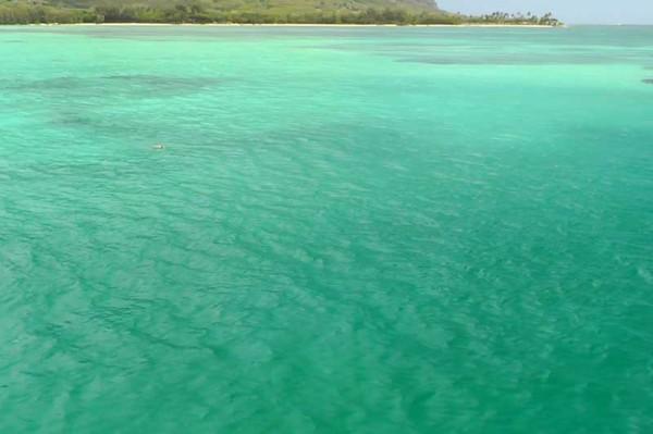 カネオヘ湾クルーズ 船上から2~3匹のアオウミガメを見えた