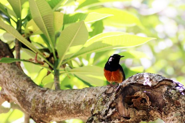 ココクレーター植物園で見かけた鳥