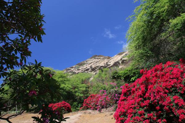 ココクレーター植物園