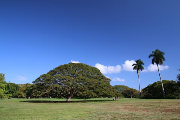 モアナルア・ガーデン(日立の木)