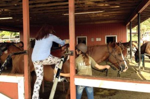 乗馬スタッフの女性が、馬にあう体格の人を指名 して馬に乗せます。