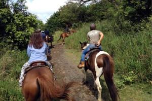 クアロアランチの乗馬のルートはほとんど平坦です