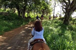 クアロアランチの乗馬