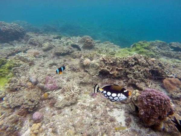 ビーチからエントリーして20mも泳ぐとカラフルな魚やサンゴが現れます。