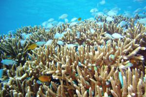 座間味島の海の中(2) 群れ泳ぐ熱帯魚 フリー写真