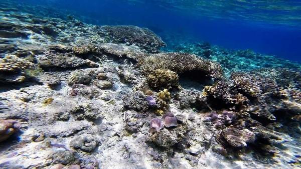 ニシハマビーチの海の中(ビーチから30m程度) 魚の数は少なかったですが、美しいサンゴ礁が点在しています。