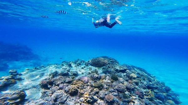 ニシハマビーチの海の中(ビーチから50m~80程度) この時は干潮だったので、サンゴ礁までは2~3mぐらい