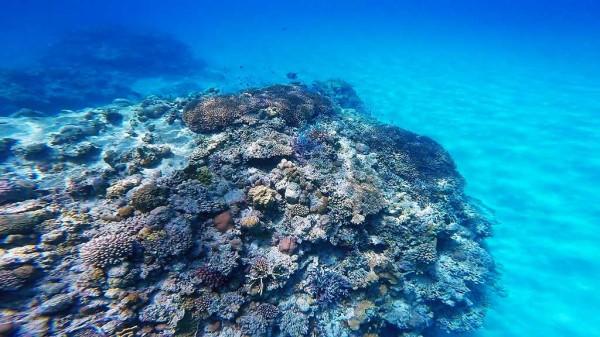 ニシハマビーチの海の中(ビーチから50m~80程度) 遊泳区域のヴイがある周辺です。水深5~8m程度。沖合には白い砂浜が一面に広がっています。