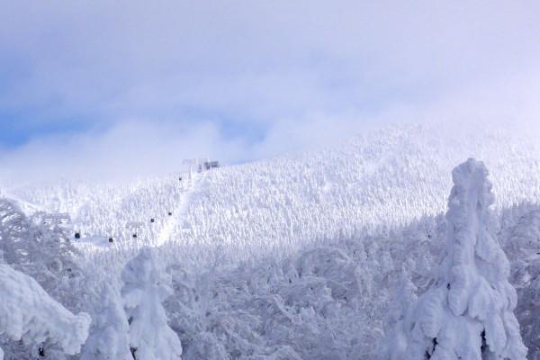 ユートピアゲレンデから樹氷原を望む