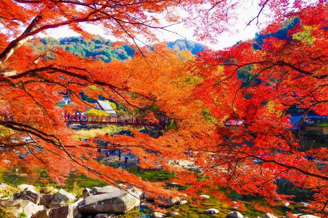 待月橋(たいげつきょう)の紅葉