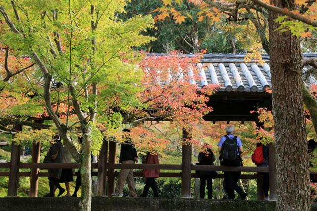 京都 東福寺の紅葉 2015年
