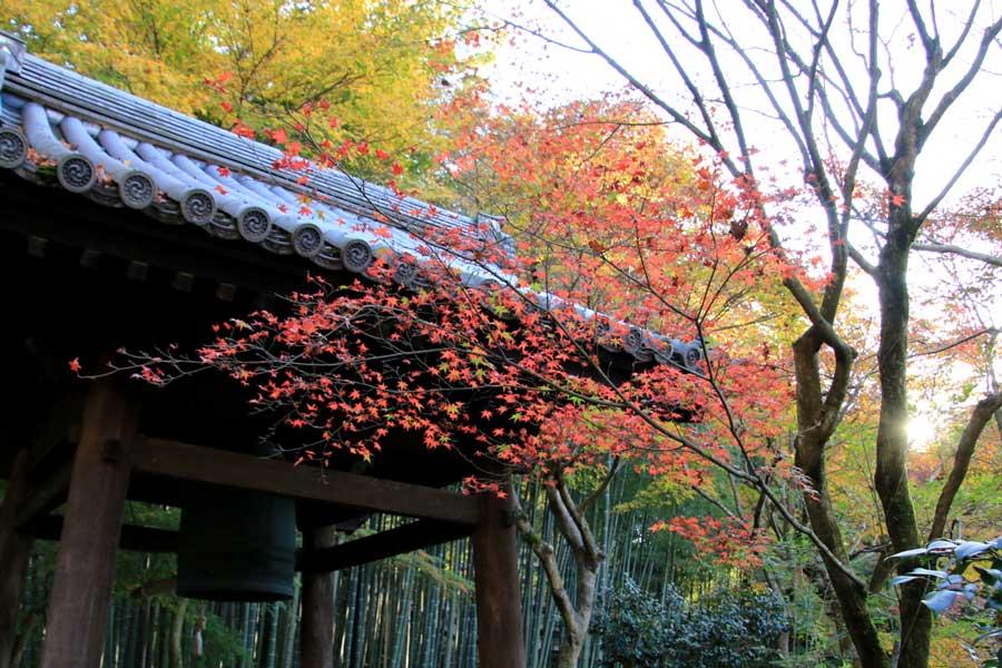 圓光寺の紅葉(京都)2015年