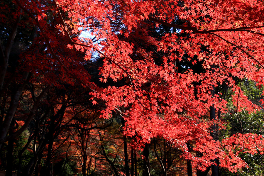 毘沙門堂の紅葉(京都)