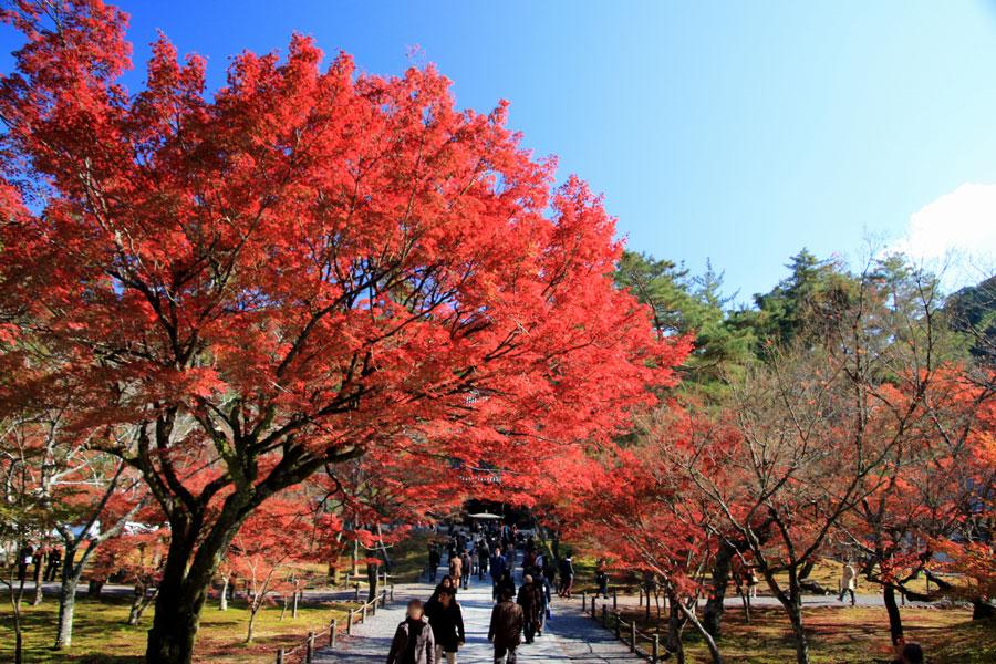 南禅寺の紅葉(京都)