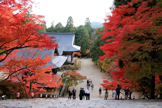 京都 高雄(神護寺)の紅葉