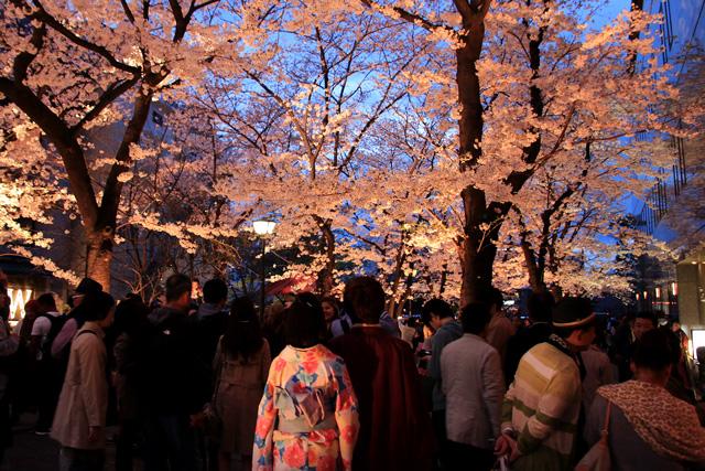 祇園白川のライトアップ