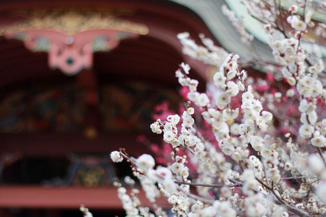 宝物殿の前の白梅の人気の撮影スポット