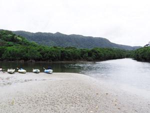西表島のマングローブ