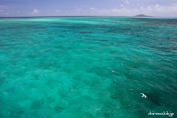 池間島大橋からはサンゴ礁の群生や海鳥が見られる