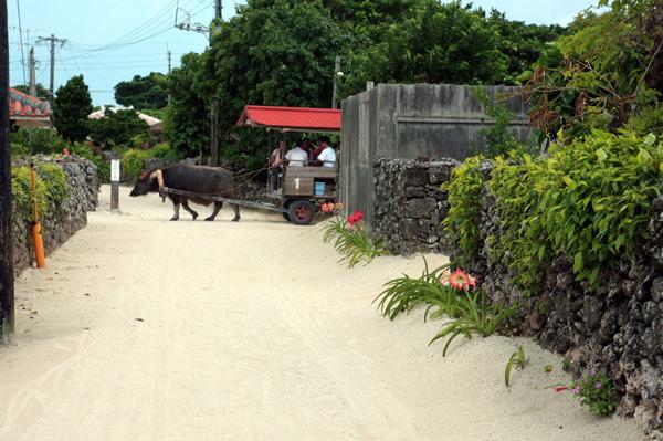 竹富島(水牛車で観光)