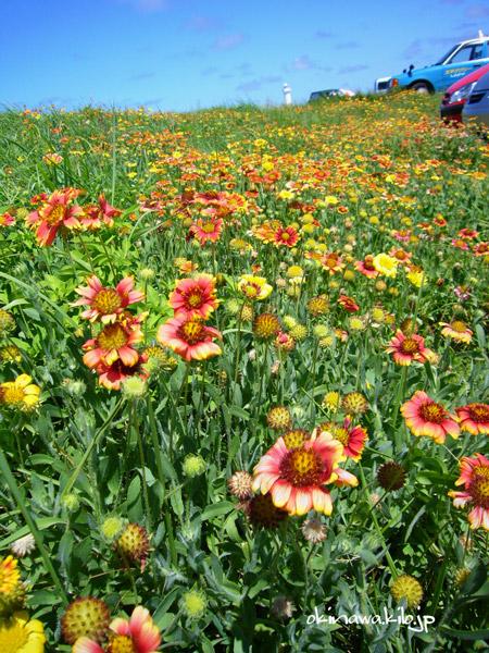 東平安名崎の植物は県の天然記念物に指定されています